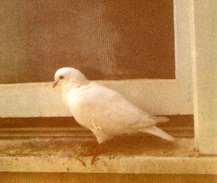 This bird sat outside the window while I was a newborn at Mt. Zion Hospital. My parents say it's because I'm special.