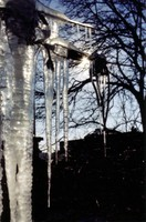 Icicles hanging outside my window in Inwood.