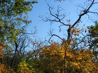 Inwood Hill Park: a crisp fall sky.