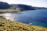 Isle of Skye coastline, with sheep.