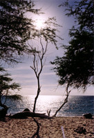 Tree on beach.