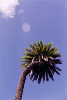 One of the Pettus' lovely palms.