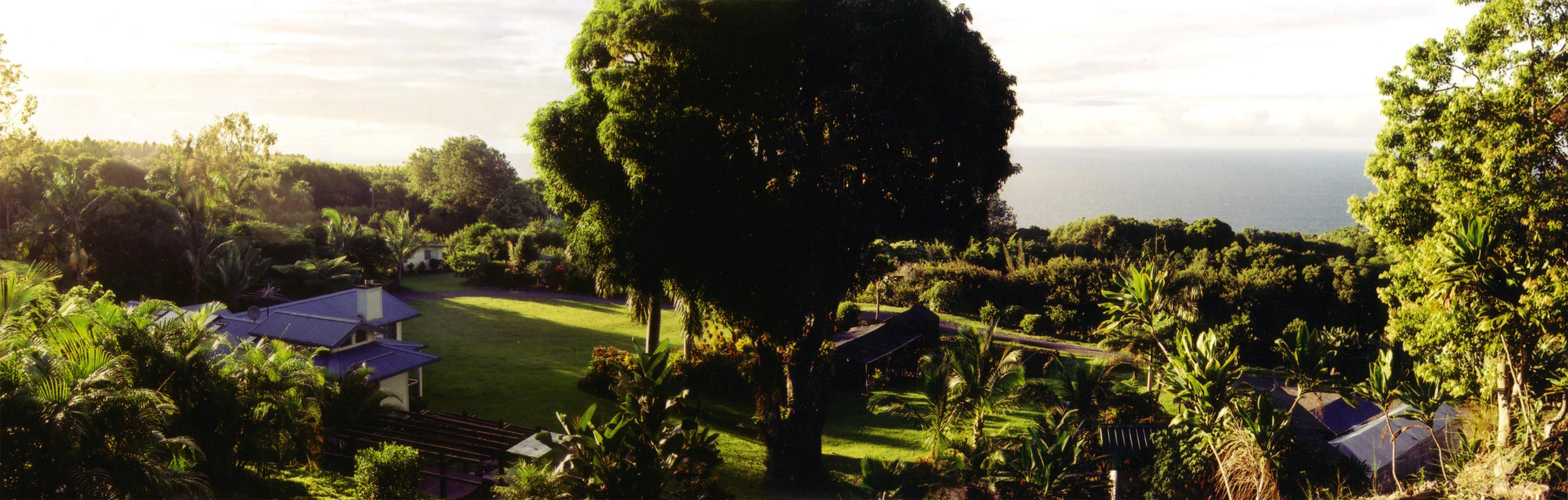A panorama of the Pettus' house on the Hamakua Coast of the Big Island, pasted together from two photos.
