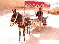 Our ill-mannered donkey taxi driver.