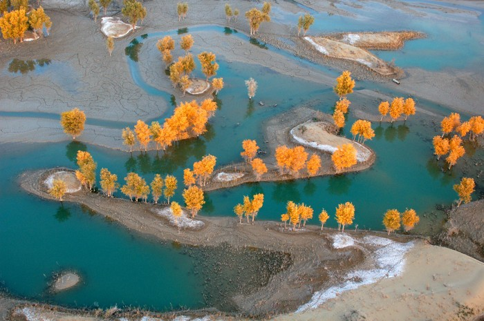 A bird's eye of the Tarim River and diversifolius poplar trees, taken from the backseat of the ultra-light.