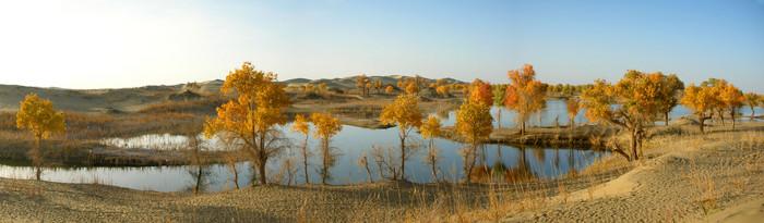 An early evening panorma of diversifolius poplar trees and the Tarim River at Lo Bu Ren Chun Zai.