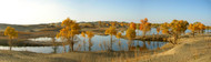 An early evening panorma of diversifolius poplar trees and the Tarim River at Lo Bu Ren Chun Zai.
