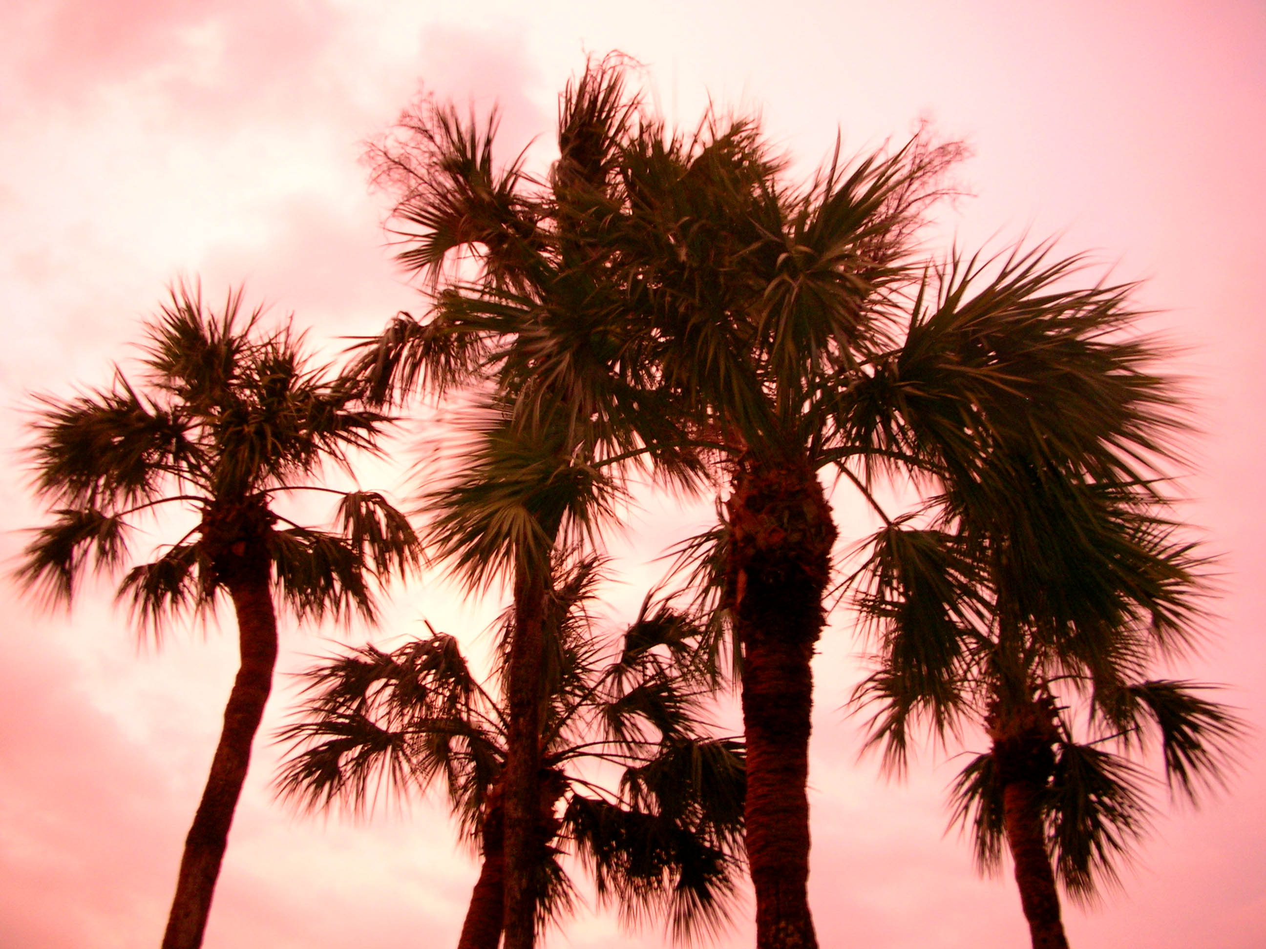 Yes, the sunset really was this pink when I arrived in Florida.