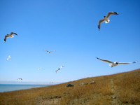 Bird Island at Qinghai Lake. Yes, there are lots of birds... but there were more before the Chinese took extreme measures here in 2005 to control the spread of bird flu.