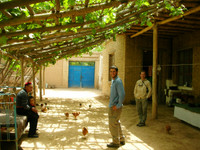 While visiting Kuqa we visited the pleasantly shaded family home of my Uyghur friend, Guzelnor. Her father and son are on the left. Nir and Mirek are on the right.