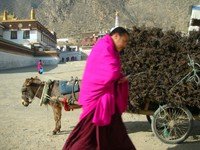 A donkey cart laden with fragrant incense branches behind a monk with cellphone.