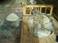 A pile of silkworm cocoons waiting to be boiled.