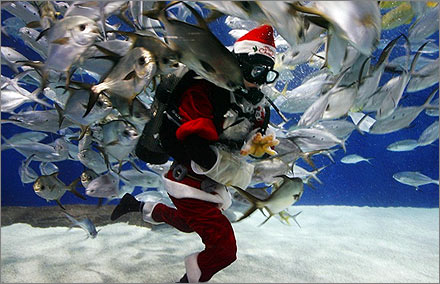 A diver dressed as Santa Claus feeds fish at the Shanghai Ocean Aquarium December 24, 2007. REUTERS/Aly Song