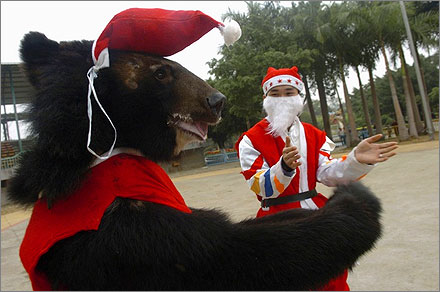 A bear dressed in a Santa Claus costume is trained to applaud at a zoo in Nanning, Guangxi Zhuang Autonomous Region.