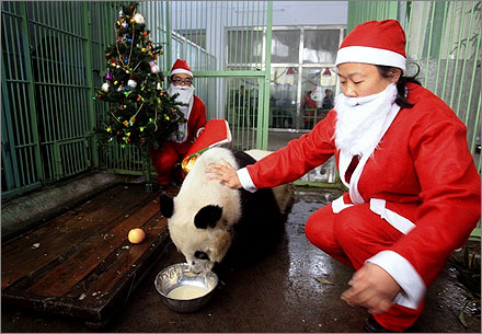 Zookeepers dressed as Santa Claus feed Tao Tao, 35, the oldest panda in the world, with its favourite food at Jinan zoo, Shandong province.
