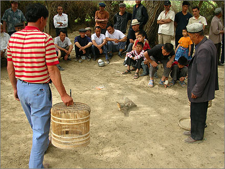 Cockfighting in Xinjiang, China.