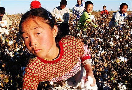 Children picking cotton in Xinjiang.