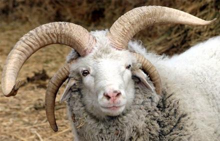 Baaaaa. I'm a crazy sheep!