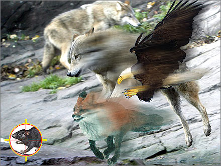 Xinjiang's crack force of eagles, foxes, and wolves.