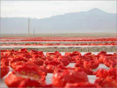 Demeter Foods' tomatoes drying on racks near Hejing, Xinjiang, with the Tian Shan Mountains in the distance.