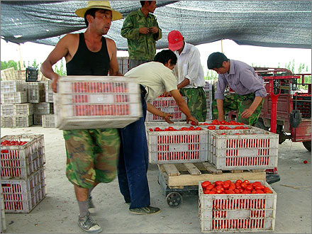 Crates full of tomatoes.